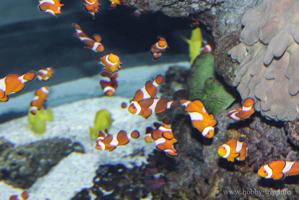 Turkuazoo-akvarium-6
