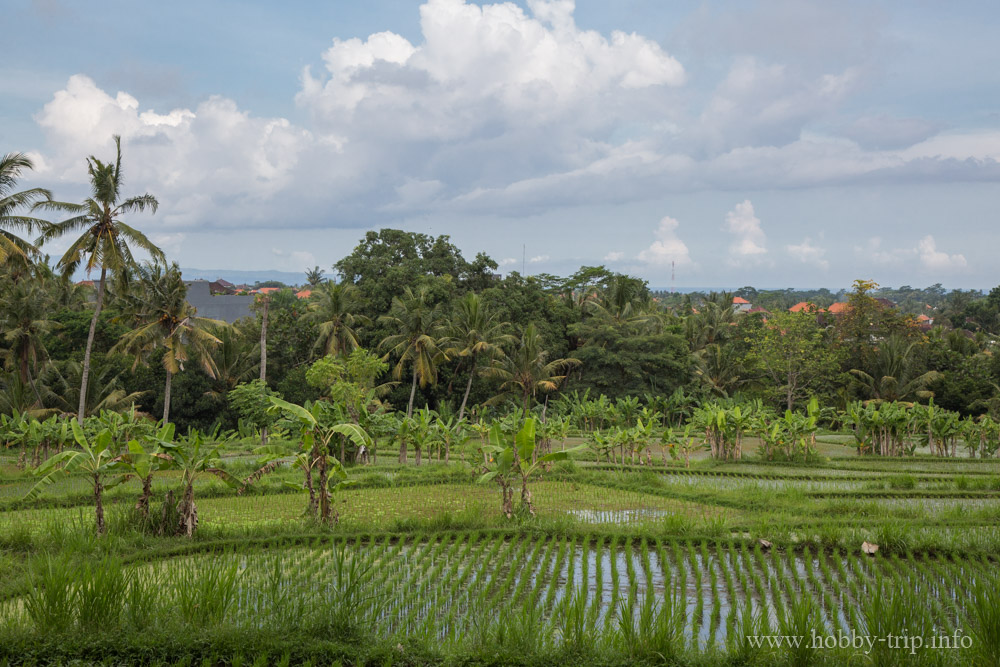 Оризови тераси на остров Бали