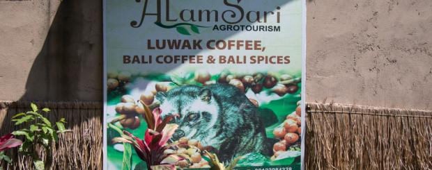 Ферма за кафе Kopi Luwak - снимки Бали